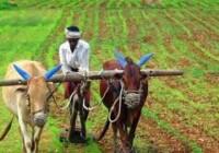सरकार द्वारा किसानों के लिए चलाए गए विशेष केसीसी अभियान में 1.35 लाख करोड़ रुपये की खर्च सीमा के 1.5 करोड़ केसीसी जारीकिये गए